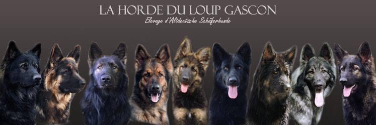 La Horde du Loup Gascon