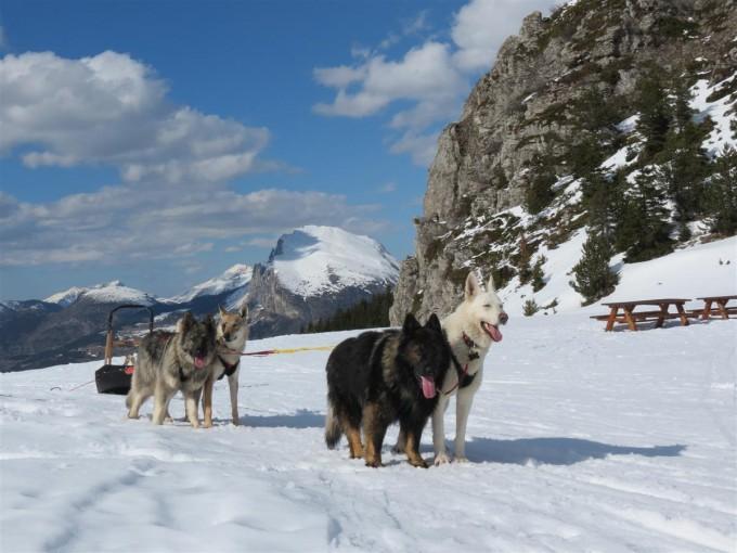 Volontaires, les Altdeutsche Schäferhunde vous emmeneront aux sommets !