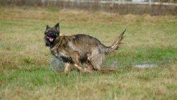 Malko Comme chiens et loups