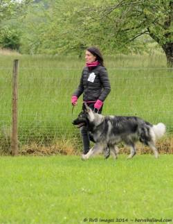 Argan de la Légende du Loup Noir