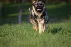 Oonagh de la Légende du Loup Noir