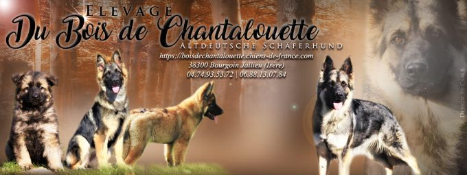 Du Bois de Chantalouette
